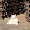 愛犬家も気になるカルディ「ネコの日バッグ」