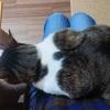 猫が飼い主の膝にのってやってもいいと思えるとき