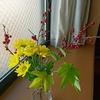 ウメモドキと菊
