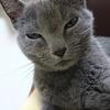 【猫が家出しました→帰宅しました】10日間どうしていたのだろう?