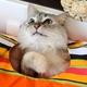ウチの猫が食いつく意外なもの3つ