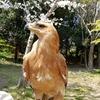 4月4日(土)再び姿を見せた鷲