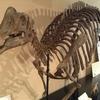 新種哺乳類化石を恐竜好き小学生が大発見とな。