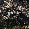 【目黒川お花見2020】コロナの影響で今年は様子が違った《ご注意を》