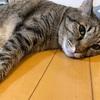 ビビリ倒す猫