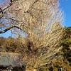 【縮小して行います】普濟寺恒例の春季大護摩祭