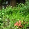 元の姿に戻る庭