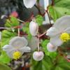 白い花が咲く秋の山野草