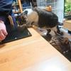 猫は飼い主のちょっとした作業にも、ワクワクするんです