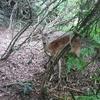 鹿が捕まった