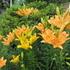 町の中の花々