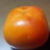 しつこかな私。グレイ柿についての結果