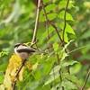 公園でも川辺でも小鳥がいっぱいで大興奮