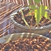 盆栽棚、夏を迎える準備