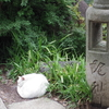 港区の愛宕神社(ほおづき市 千日詣り)