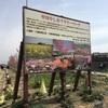 中川やしおフラワーパーク(八潮市)花桃まつり開催!ママ目線の子供の遊び場・公園情報