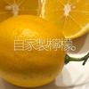 049食目「自家製檸檬」