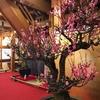 桜だけじゃない⁉大和郡山城跡公園の盆梅展と天守台からの眺め