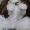 雌の老犬に多い乳腺腫瘍の症状と悪性と良性について