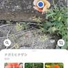 Google lensで雑草の名前を調べてみよう