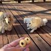 わんこ米粉クッキーお味見タイム