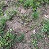【暮らし】新しい畑@二箇所、新しい芽吹き❤️