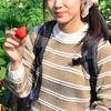 姫路の大人デートで食べ放題のいちご狩りに行くならココ!