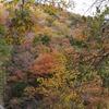 奈良:みたらい渓谷。紅葉。