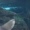 タイガーフィッシュHydrocynus vittatus