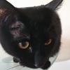 今日の黒猫モモ&白黒猫ナナの動画ー1006