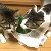 新しいネコ草を買って来てくれたニャン♪