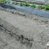 野菜の種と苗を植える 計5種類