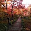 京都④ 美しすぎる宝筐院