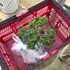 盆栽を持ち運ぶのに便利なカゴ