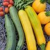 有機栽培を超えた?最先端の農業技術を見てきました!②