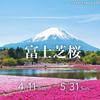 17日(土)より富士本栖湖リゾート 富士芝桜まつり開催予定