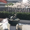 桜の開花状況 水天宮 3/27