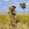 コロナウィルスによるマイクロファイナンスへの影響 カンボジア