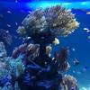 サンシャイン水族館🐠