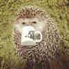 日本茶をすするがんも