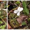 白花のスミレ、今年はじめてのタケノコ