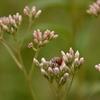 秋の七草と小さな虫達