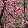 吉川英治『三国志』ーー散歩。iPhone。youtube。朗読。