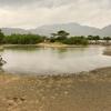 由布島のマングローブ干潟(沖縄県由布島)