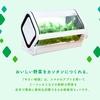 やさい物語、スマホで見守る「IoT水耕栽培キット」を沖縄セルラーが発売