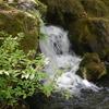 大根島・由志園の花と情景 10(島根県松江市)