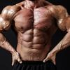 筋力トレーニングの基礎知識 筋線維の解剖学的な要因