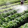 グリホサート(13)~天然農薬VS人工農薬:グリホサートとフラノクマリンはどう違うんじゃ?