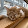 猫カフェに行って来た