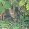 6月28日(木)  ラブラブ  ギリシャ美猫(びじん)😻